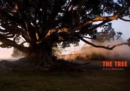 thetree.jpg