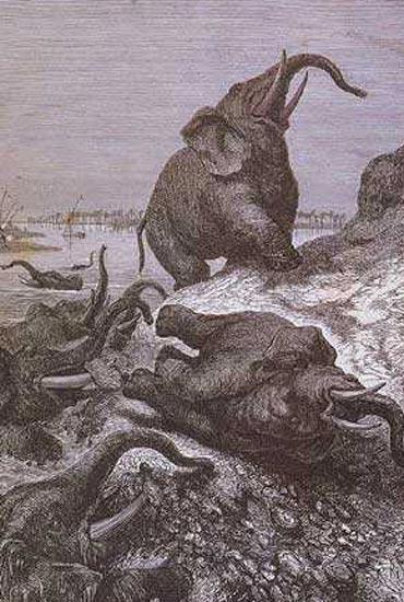 elephant-cimetiere.jpg