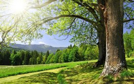 143382__forest-trees-grass-green-summer-sun-glare_t